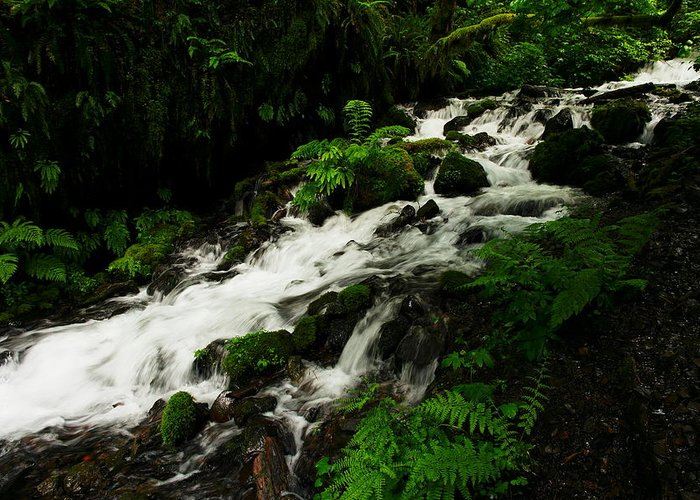 Ferns Greeting Card featuring the photograph A Fern On An Isalnd On Wahkeena Creek by Jeff Swan