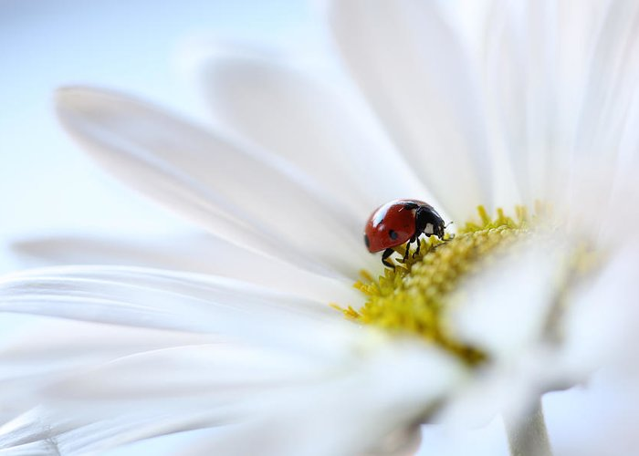 Ladybug Greeting Card featuring the photograph A Fine Lady by Aaron Aldrich