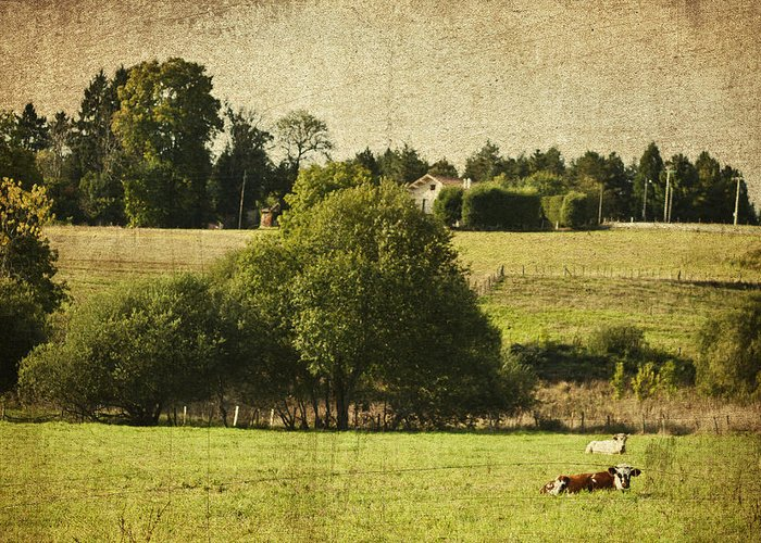 Agriculture Greeting Card featuring the photograph A French Country Scene by Georgia Fowler