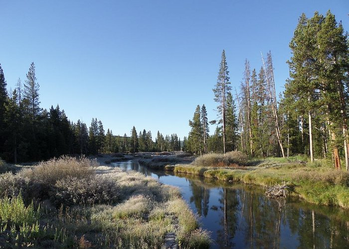 Blue Greeting Card featuring the photograph A Frosty Morning Along Obsidian Creek by Frank Madia