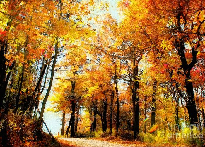 Autumn Leaves Greeting Card featuring the photograph A Golden Day by Lois Bryan