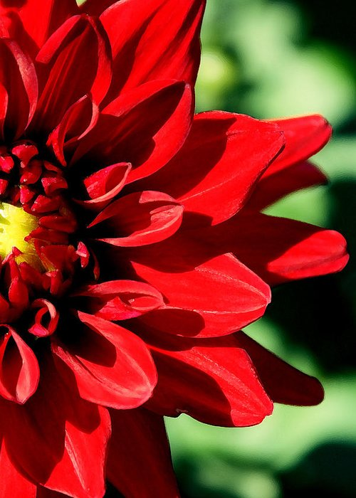 Flower Greeting Card featuring the photograph A Half by Sabrina Naayen