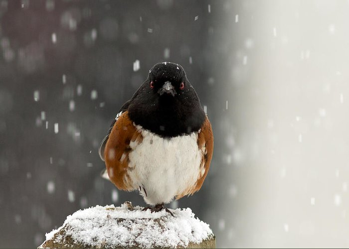 Bird Greeting Card featuring the photograph A Little Help Please? by Dennis Bucklin