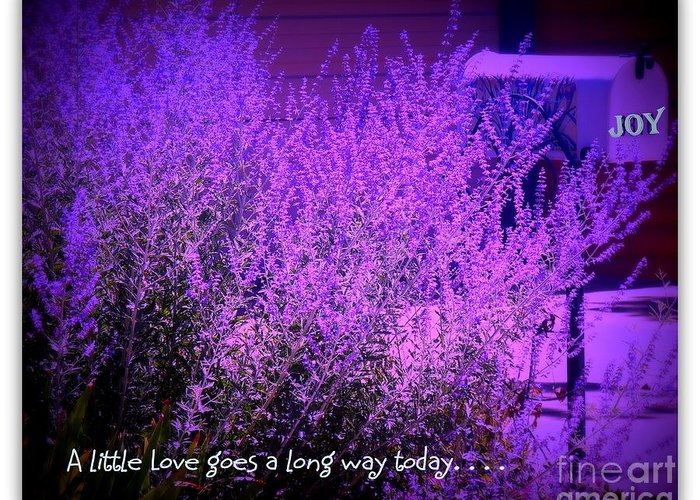 Love Greeting Card featuring the photograph A Little Love by Bobbee Rickard