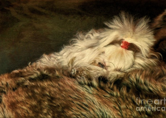 Dog Greeting Card featuring the photograph A Long Winter's Nap by Lois Bryan