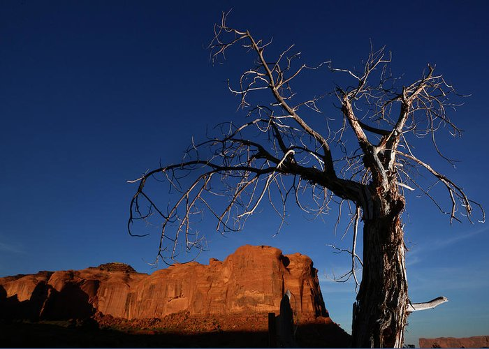 Color Image Greeting Card featuring the photograph A Mesquite Trees And Buttes by Raul Touzon