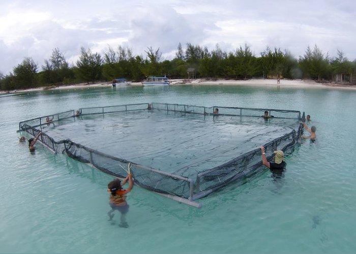 Borneo Greeting Card featuring the photograph A Net For Turtle Research by Science Photo Library