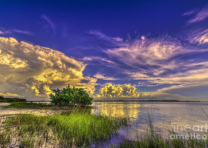 Clearwater Greeting Card featuring the photograph A New Experience by Marvin Spates