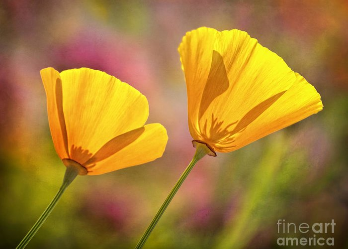Flowers Greeting Card featuring the photograph A Pair by Claudia Kuhn