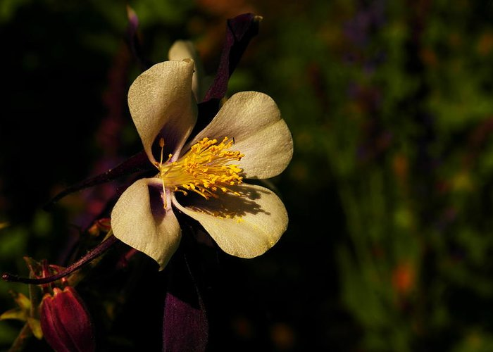 Flowers Greeting Card featuring the photograph A Pretty Flower In The Sun by Jeff Swan