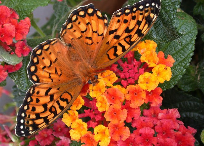 Butterfly Greeting Card featuring the photograph A Quick Snack by Shane Bechler