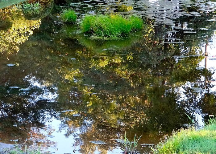 Walden Pond Greeting Card featuring the photograph A Quiet Little Pond by Ira Shander