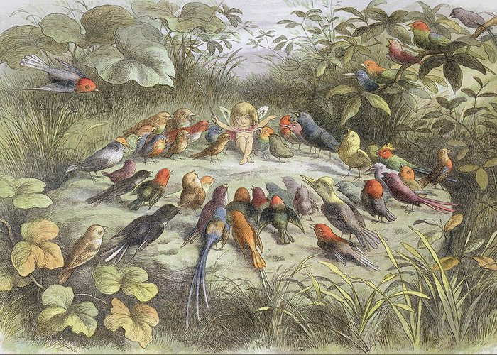 Bird Greeting Card featuring the drawing A Rehearsal In Fairy Land, Illustration by Richard Doyle