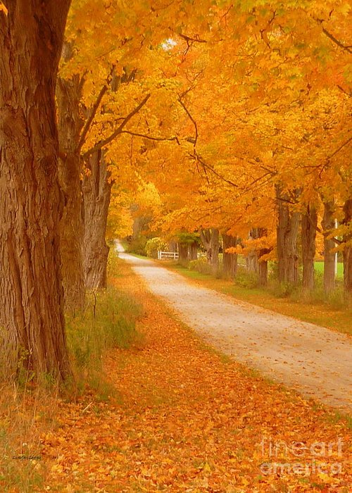 Autumn Photography Greeting Card featuring the photograph A Romantic Country Walk In The Fall by Lingfai Leung
