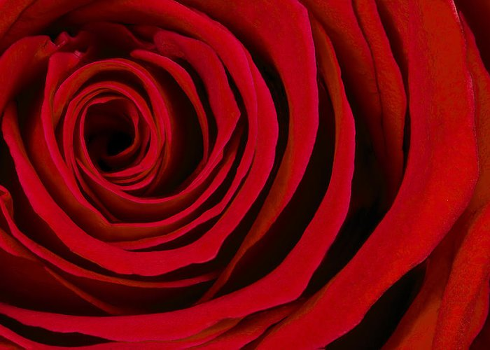 3scape Photos Greeting Card featuring the photograph A Rose For Valentine's Day by Adam Romanowicz