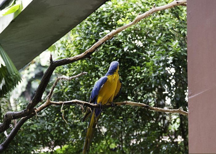 Action Greeting Card featuring the photograph A Single Macaw Bird On A Branch Inside The Jurong Bird Park by Ashish Agarwal
