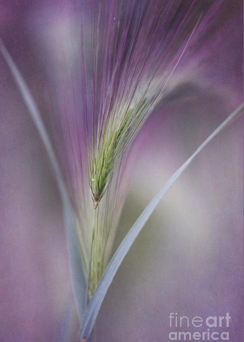 Texture Greeting Card featuring the photograph A Single Whisper by Priska Wettstein