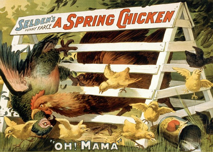 Entertainment Greeting Card featuring the drawing A Spring Chicken by Aged Pixel