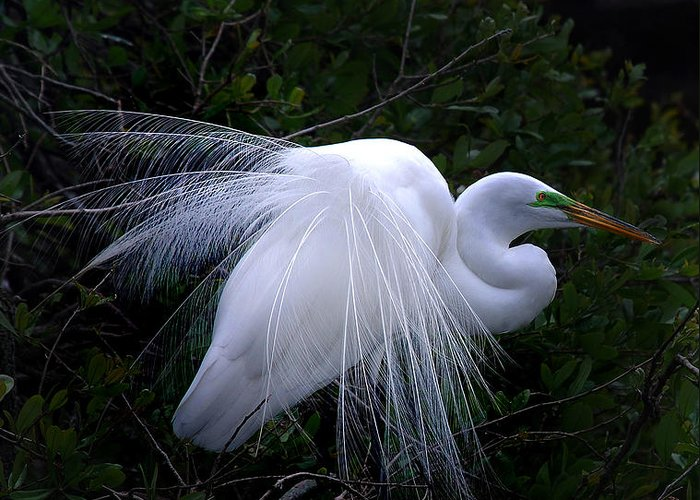 Egret Greeting Card featuring the photograph A Stand Out by Skip Willits