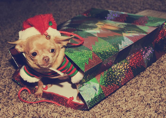 Dog Greeting Card featuring the photograph A Sweet Christmas Surprise by Laurie Search