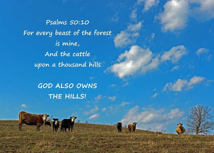 Cattle Greeting Card featuring the digital art A Thousand Hills by Lorna Rogers Photography