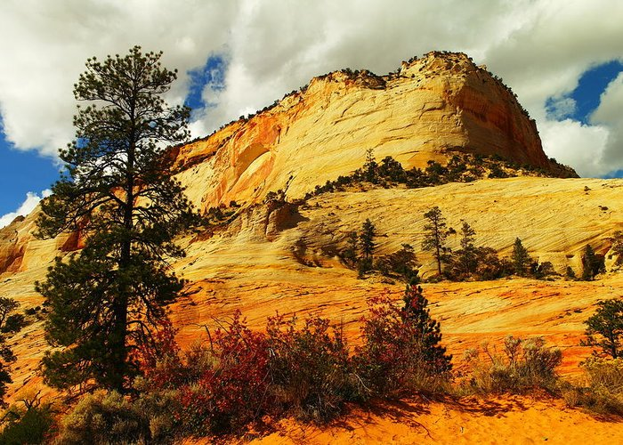 Landscape Greeting Card featuring the photograph A Tree And Orange Hill by Jeff Swan
