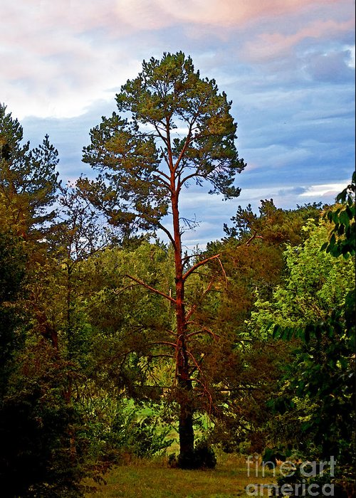 Tree Greeting Card featuring the photograph A Tree by Gwyn Newcombe