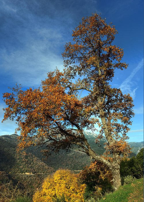 Tree Greeting Card featuring the photograph A Tree In Arcadia - Greece by Constantinos Iliopoulos