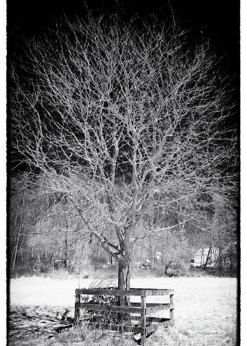 A Tree In The Snow Greeting Card featuring the photograph A Tree In The Snow by John Rizzuto