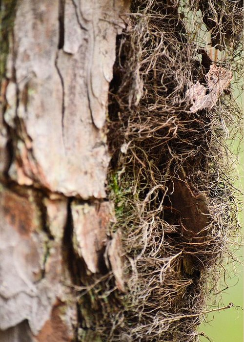 Tree Greeting Card featuring the photograph A Treetrunk Abstract by Maria Urso