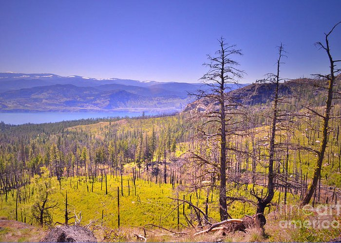 Mountain Greeting Card featuring the photograph A View From Okanagan Mountain by Tara Turner
