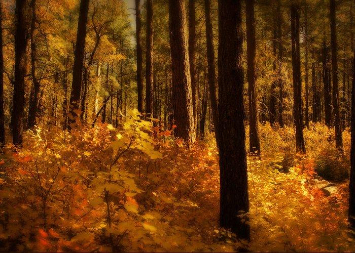 Fall Greeting Card featuring the photograph A Walk Through The Woods by Saija Lehtonen