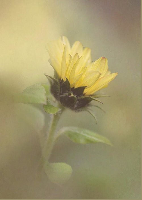 Sunflower Greeting Card featuring the photograph A Whisper Of A Sunflower by Angie Vogel