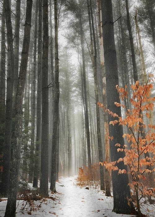 Woods Greeting Card featuring the photograph A Winters Path by Bill Wakeley