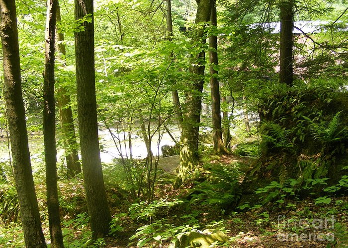 A Hike In The Pennsylvania Woods Near A Stream And Just Through The Greeting Card featuring the photograph A Woodland Trail by Nancy Kane Chapman
