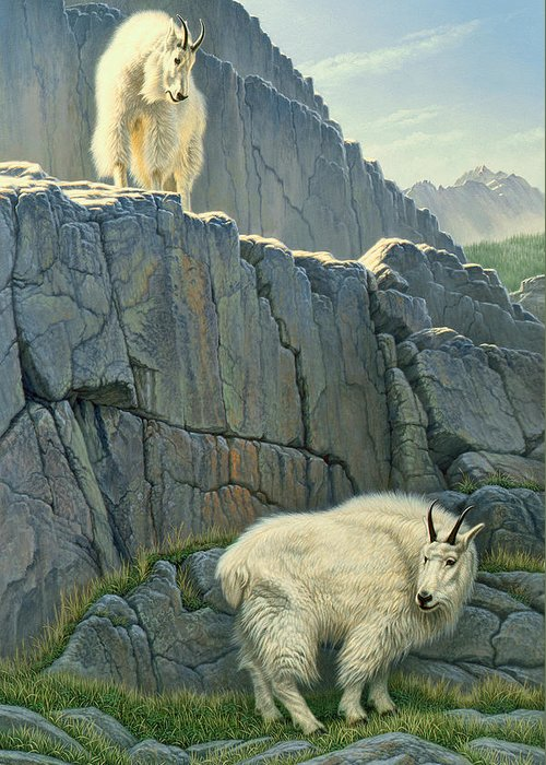 Mountain Goat Paintings Greeting Cards