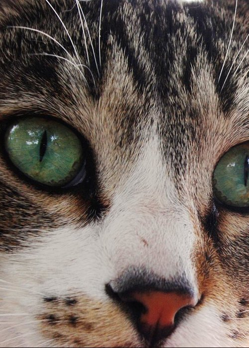 Cats Greeting Card featuring the photograph Absolute Honesty by Anita Dale Livaditis