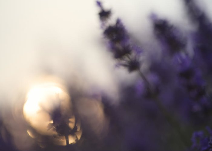 Landscape Greeting Card featuring the photograph Abstract Blur Beautiful Differential Focus Technique Giving Shal by Matthew Gibson