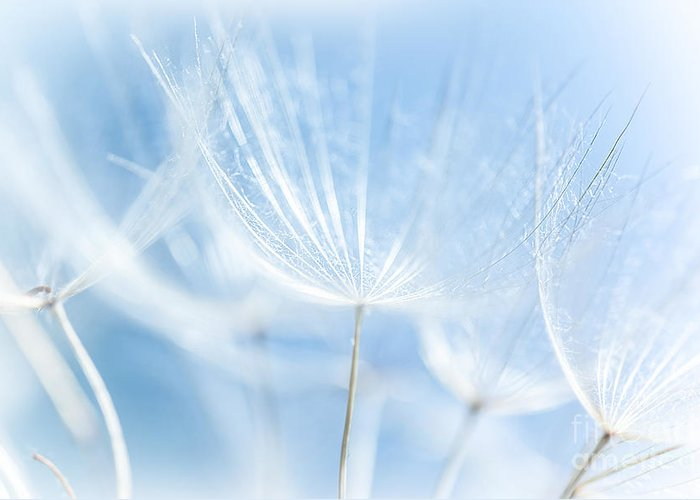 Abstract Greeting Card featuring the photograph Abstract Dandelion Background by Anna Om