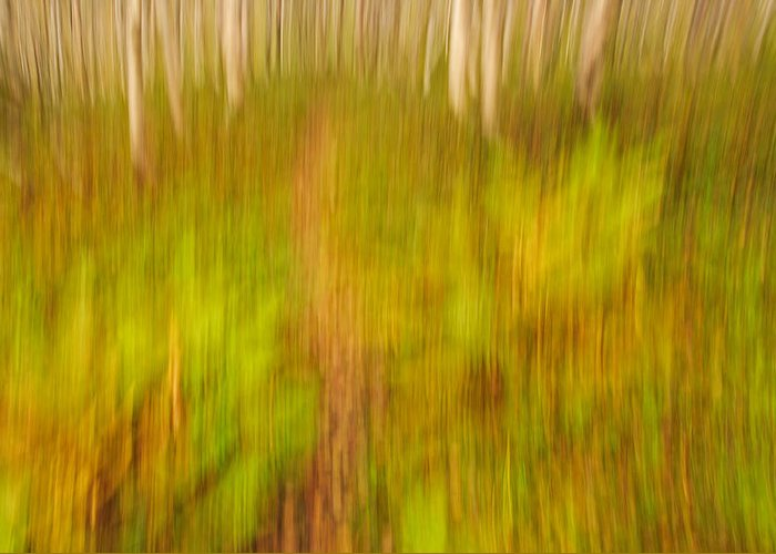 Abstract Greeting Card featuring the photograph Abstract Forest Scenery by Gry Thunes