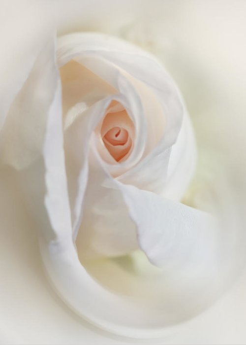 Rose Greeting Card featuring the photograph Abstract Pastel Rose Flower by Jennie Marie Schell