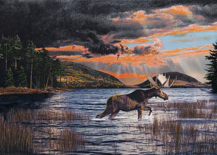 Moose Greeting Card featuring the drawing Acadia Feast by Brent Ander