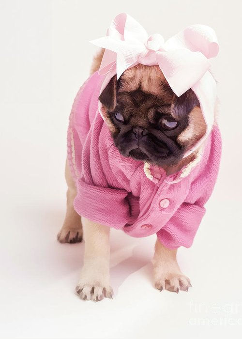 Pug Puppy Pink Bow Sweater Dog Doggie Puppies Dogs Greeting Card featuring the photograph Adorable Pug Puppy In Pink Bow And Sweater by Edward Fielding