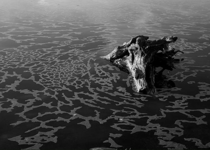 Driftwood Greeting Card featuring the photograph Adrift by Alex Lapidus