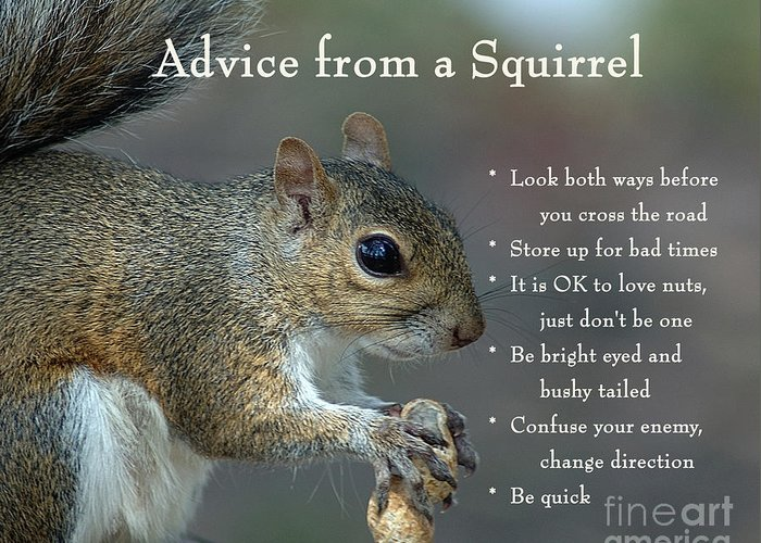 Advice From A Squirrel Greeting Card For Sale By Nancy Greenland