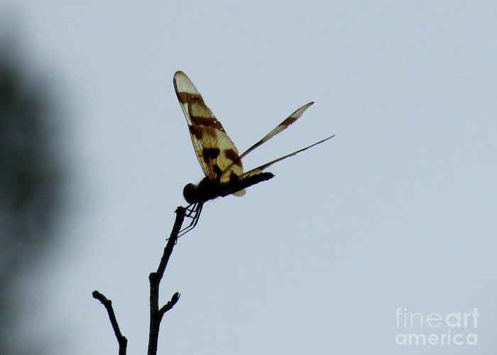 Dragon Fly Greeting Card featuring the photograph Aep525a by Scott B Bennett