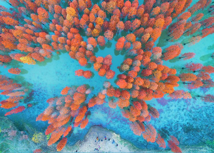 Tranquility Greeting Card featuring the photograph Aerial Drone View With Fir Tree Fall by Yaorusheng