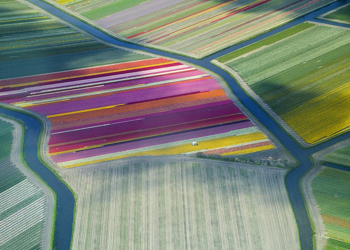 Curve Greeting Card featuring the photograph Aerial View Of Flower Fields In Spring by Frans Sellies