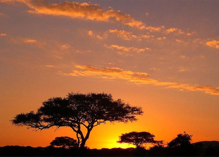 Africa Greeting Card featuring the photograph African Sunset by Sebastian Musial