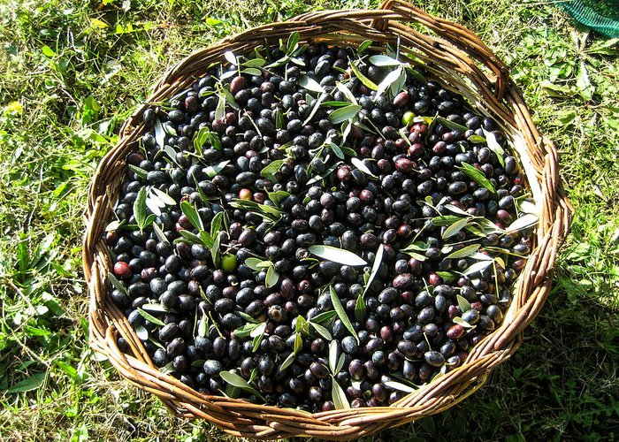 Olive Greeting Card featuring the photograph After The Harvest by Dany Lison